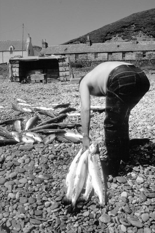 Salmon netter at work, Berriedale Beach