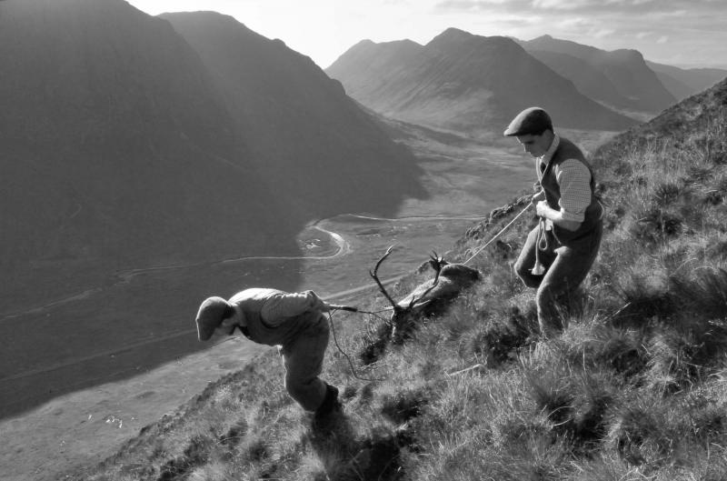 Argyll.Deer stalking, dead stag being dragged from hill.Black and white