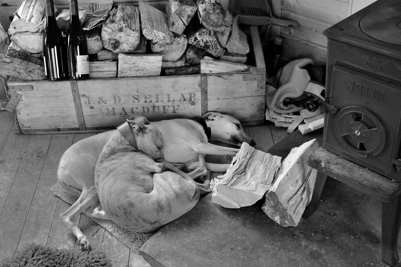 Lurchers sleeping off lunch in fishing hut
