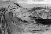 Gullane, East Lothian. Sand dune patterns. Black and white