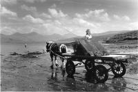 Mull. Horse pulling oyster cart into the sea. Black and white