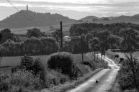 East Lothian landscape. Hare. Hopetoun monument near Haddington. Black and white